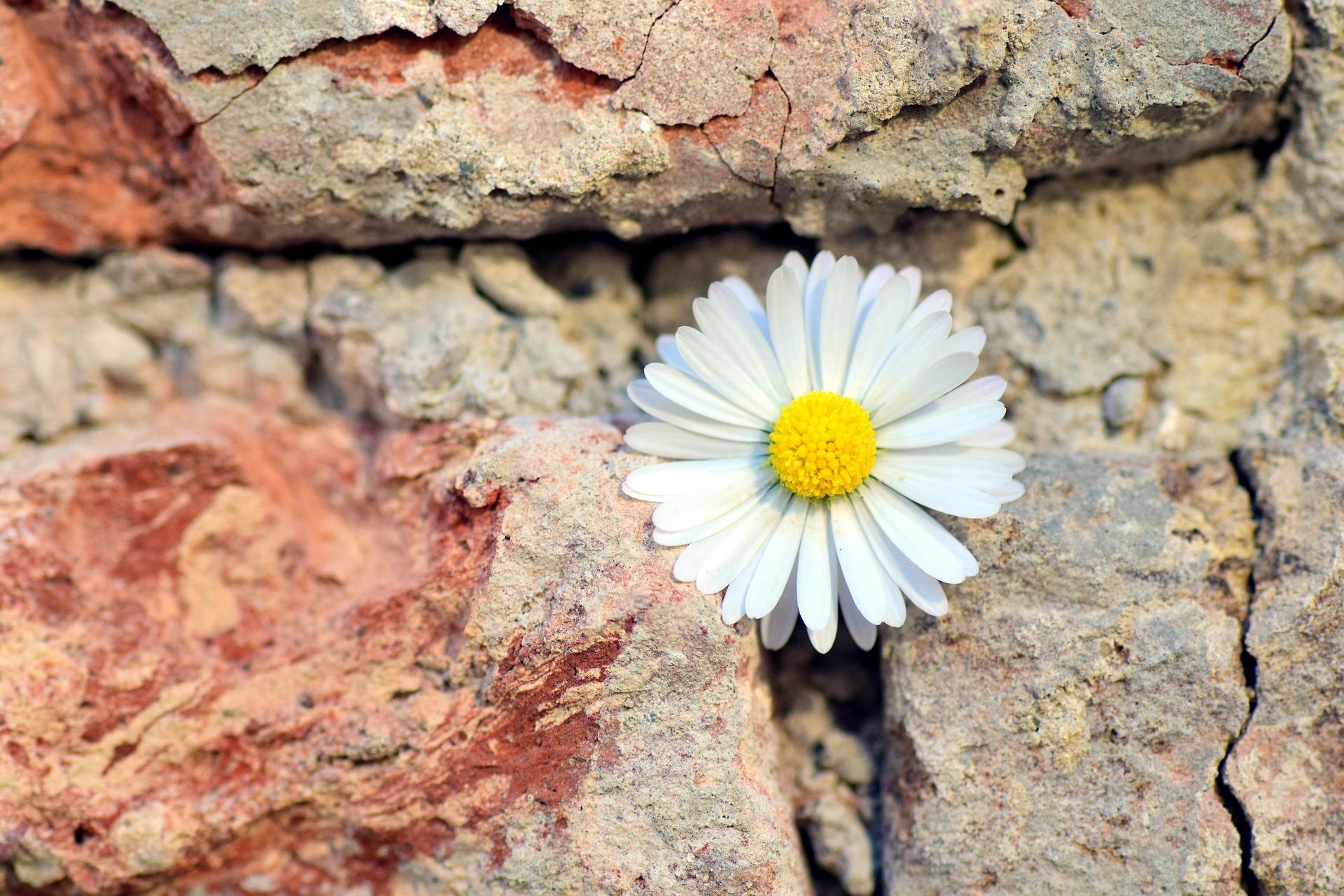 kwiatek w murze