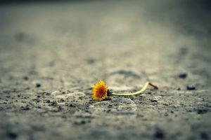 kwiatek na ziemi